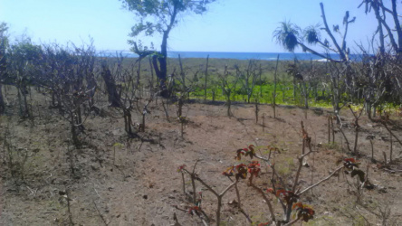 Pantai Mengili, Sumba land for sale, area 14 ha