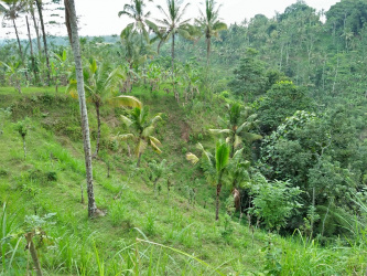 Excellent investment for hotel developer, land in Ubud, Bali