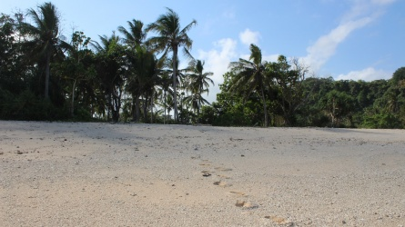 Land for sale Gaura, Waikabubak, SUMBA, 4 ha