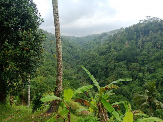 Land for sale with Hotel Licence Ubud, Bali