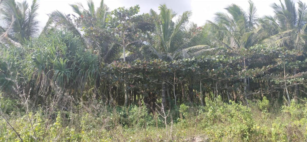 Wura Homba, Kodi, West Sumba, 1,27 ha